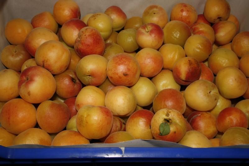 frio-mediterraneo-frutas_12