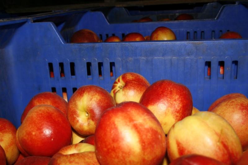 frio-mediterraneo-frutas_13