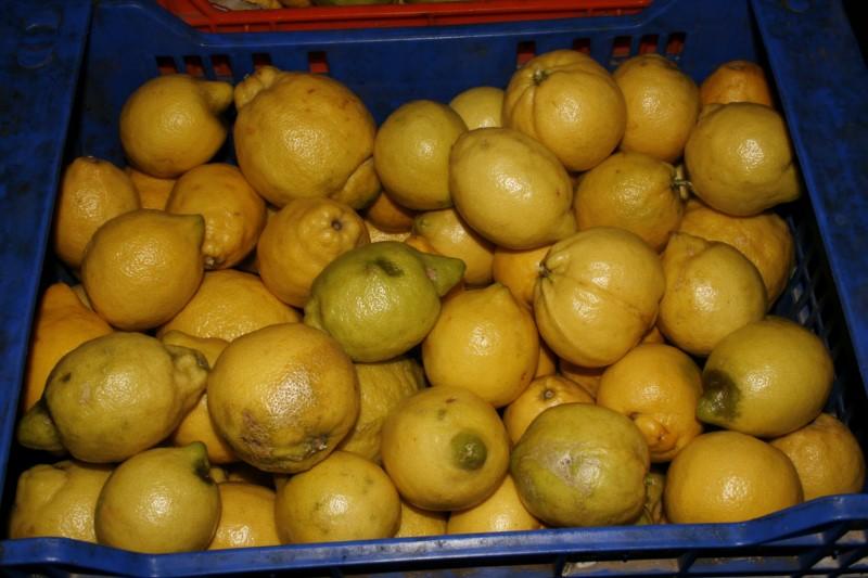 frio-mediterraneo-frutas_22